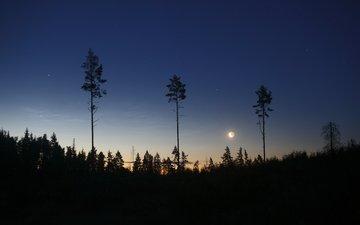небо, деревья, солнце, земля, природа, лес, пейзаж, луна