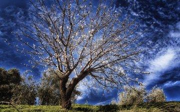 небо, облака, дерево, цветение, весна