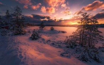 небо, облака, деревья, снег, лес, закат, зима, сумерки