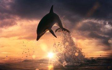 небо, облака, вода, солнце, закат, лучи, море, горизонт, брызги, блики, прыжок, дельфин