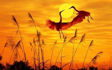 небо, свет, солнце, закат, крылья, птицы, журавль