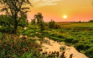 небо, трава, деревья, солнце, болото, поле, рассвет, канада, камыши, quebec