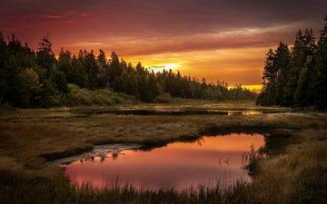 небо, трава, озеро, лес, закат
