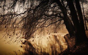 озеро, дерево, парк, ветки, осень, пруд