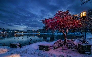 lights, lake, snow, tree, winter, the city, birds, lantern, twilight, norway, stavanger, rogaland