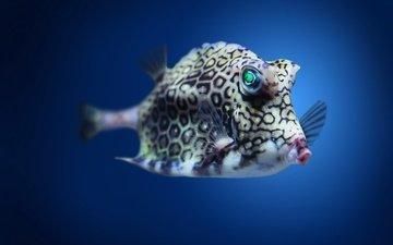 пятна, плавники, рыба, подводный мир