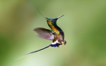 flight, wings, bird, beak, the rise, hummingbird