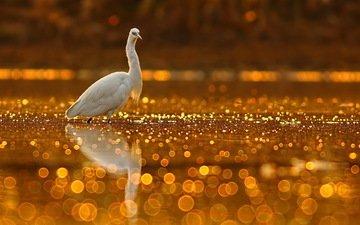 lake, nature, glare, bird, beak, heron, tahir abbas