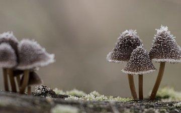 природа, макро, иней, грибы, шляпки