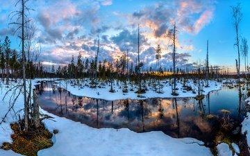 река, снег, болото, закат, сосны