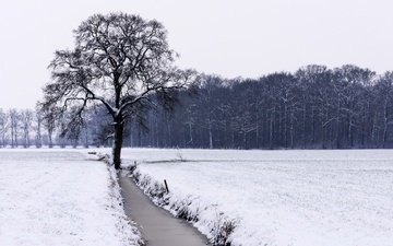 река, снег, дерево, лес, зима, поле