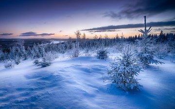снег, закат, зима, елки, сугробы