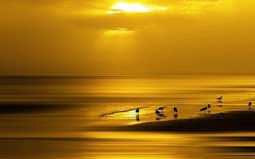 небо, солнце, берег, закат, лучи, море, горизонт, птицы, чайки