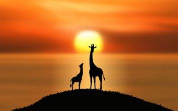 солнце, силуэты, холм, жирафы