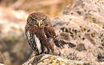 сова, природа, птица, клюв, перья