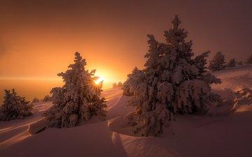 свет, деревья, солнце, снег, зима, лучи, ели, сугробы