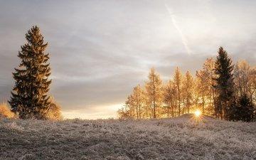 свет, деревья, солнце, зима, лучи, утро, иней