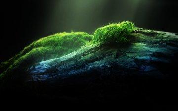свет, природа, дерево, лес, зелёный, фон, мох