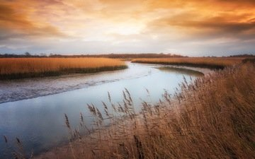 трава, река, берег, осень, камыш