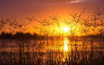 трава, вечер, озеро, солнце, природа, закат, фон, колоски