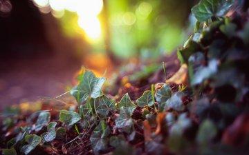 трава, земля, природа, растения, лес, макро, фон, листочки