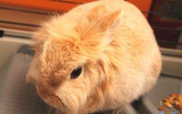усы, кролик, животное, уши, нос, мех, заяц