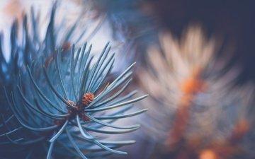 ветка, природа, елка, хвоя, макро, фон, иголки