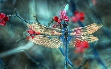 ветка, макро, насекомое, крылья, стрекоза