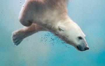 вода, море, полярный медведь, медведь, пузырьки, белый медведь