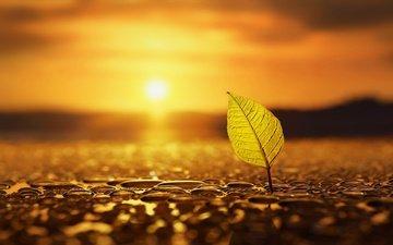вода, солнце, природа, капли, осень, лист