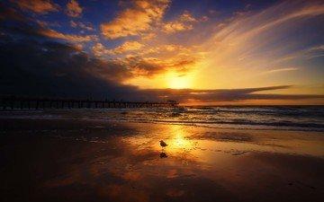 волны, закат, пейзаж, море, пирс, чайка, птица