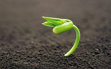 земля, зелёный, макро, росток