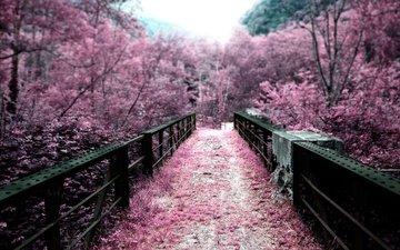 деревья, цветение, мост, япония, весна, сакура