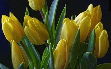 цветы, бутоны, черный фон, тюльпаны, желтые