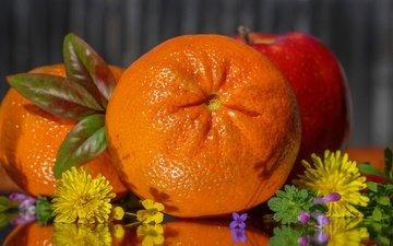 цветы, фрукты, апельсин, яблоко, цитрус