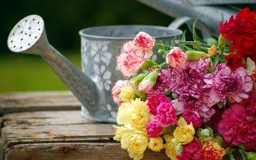 цветы, бутоны, букет, лейка, гвоздика, гвоздики
