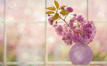 цветы, цветение, веточка, вишня, сакура, окно, ваза