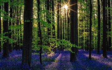 цветы, деревья, солнце, природа, лес, весна