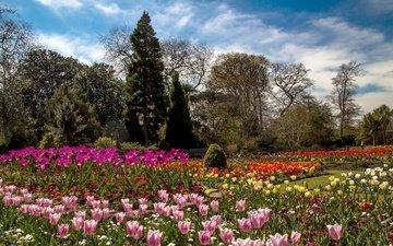цветы, деревья, великобритания, разноцветные, сад, тюльпаны, уэльс, botanic gardens, swansea
