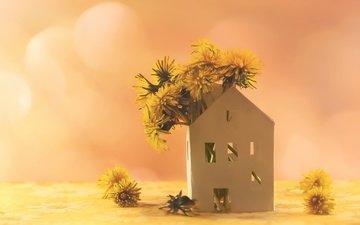 цветы, фон, домик, одуванчики, желтые