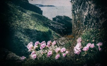 цветы, горы, природа, берег, море, гвоздики, su55