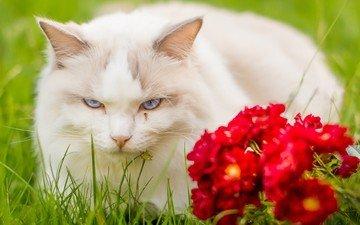 eyes, flowers, muzzle, cat, look