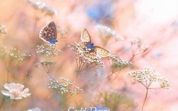цветы, природа, цветение, макро, лето, белые, бабочки, травы