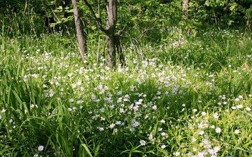 цветы, трава, деревья, зелень, лес, ромашки