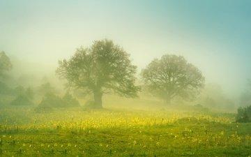 цветы, деревья, туман, поле