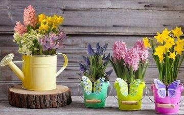 цветы, весна, бабочки, нарциссы, желтые, крокусы, лейка, гиацинт, гиацинты, мускари, декор, букеты, ведёрки