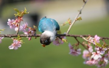 цветы, ветка, цветение, птица, попугай