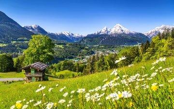 цветы, горы, деревня, германия, полевые цветы, бавария, баварии