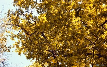 деревья, лес, листья, ветки, осень