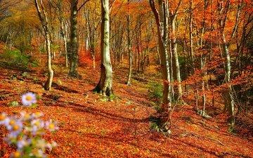 деревья, лес, листва, осень, листопад